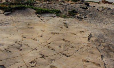 Tropy szlaków przemarszu człekokształtnych z Trachilos