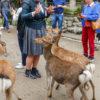 Kłaniające się jelenie
